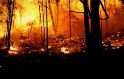 Are Bush Fire Donations Tax Deductible